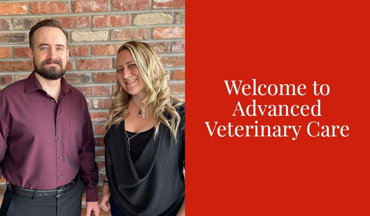 Welcome to Advanced Veterinary Care