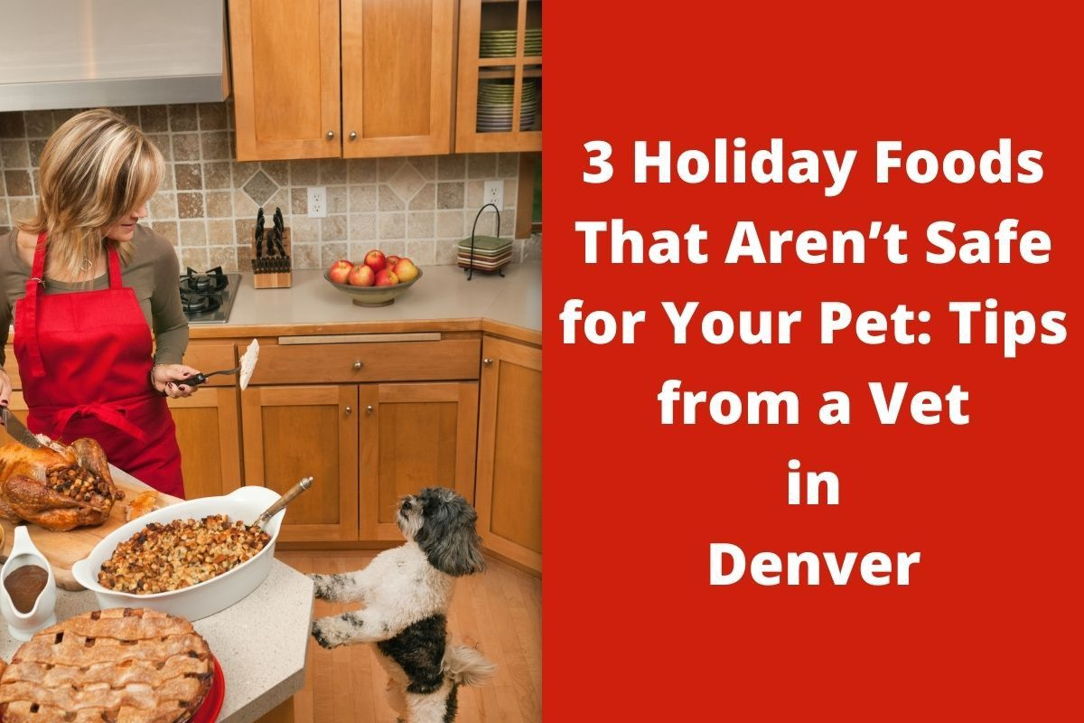 3 Holiday Foods That Aren't Safe for Your Pet: Tips from a Vet in Denver